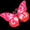 butterfly1980